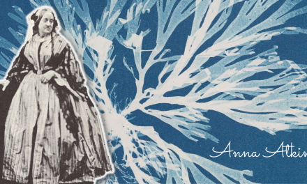 Remembering Women in Photography: Anna Atkins